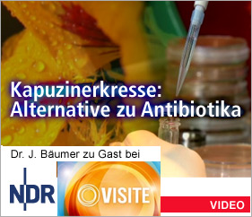 Kapuzinerkresse: Alternative zu Antibiotika